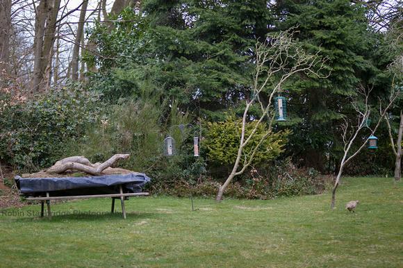My Garden Setup