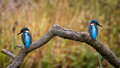 Kingfisher Bookends